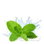 Picture of ZAZO 10ml Fresh Mint Liquid
